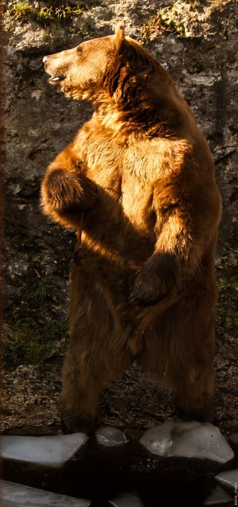 Хаджохская теснина. Медведь Тимофей.