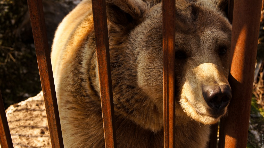 Хаджохская теснина. Медведица Маня.