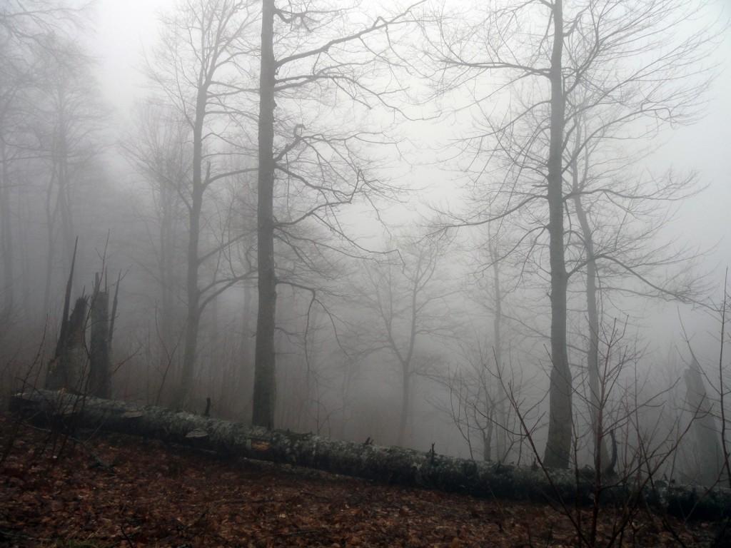 Утро на горе Круглая