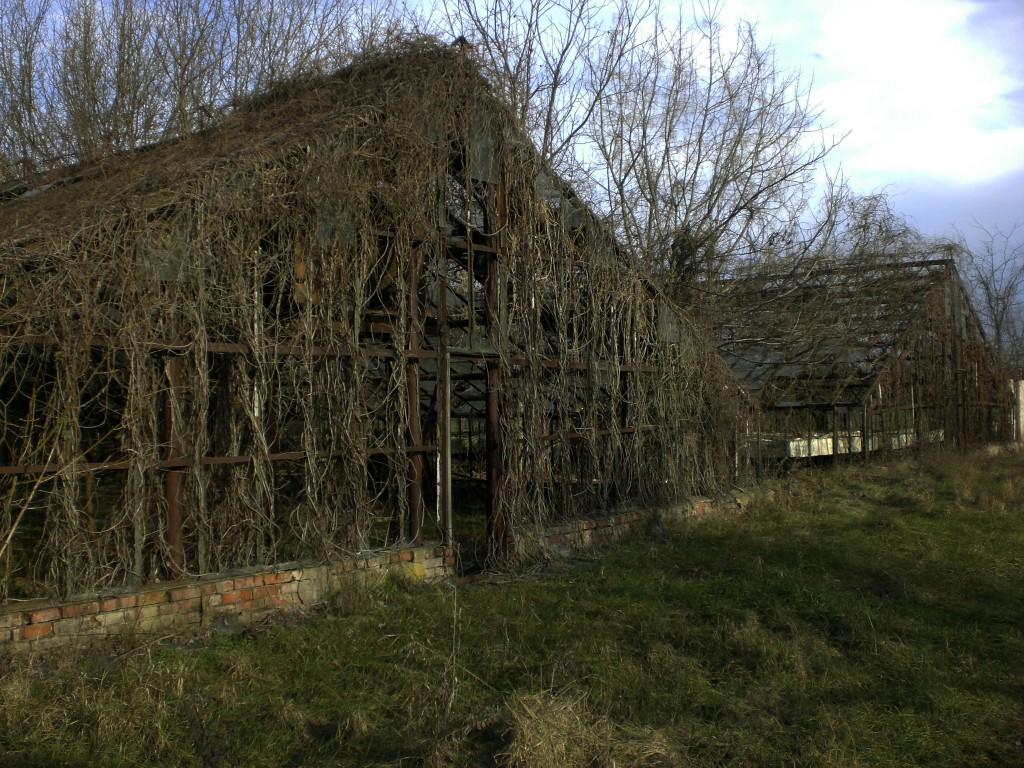 Заброшенные теплицы учхоза Кубань