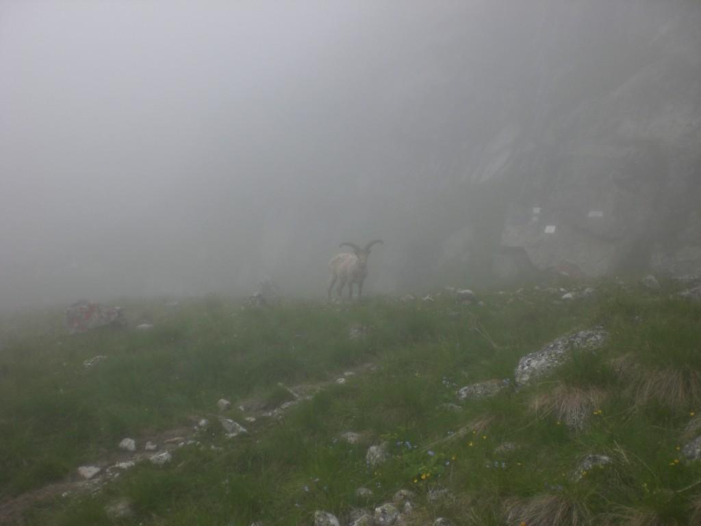 Безенги. Тур в тумане