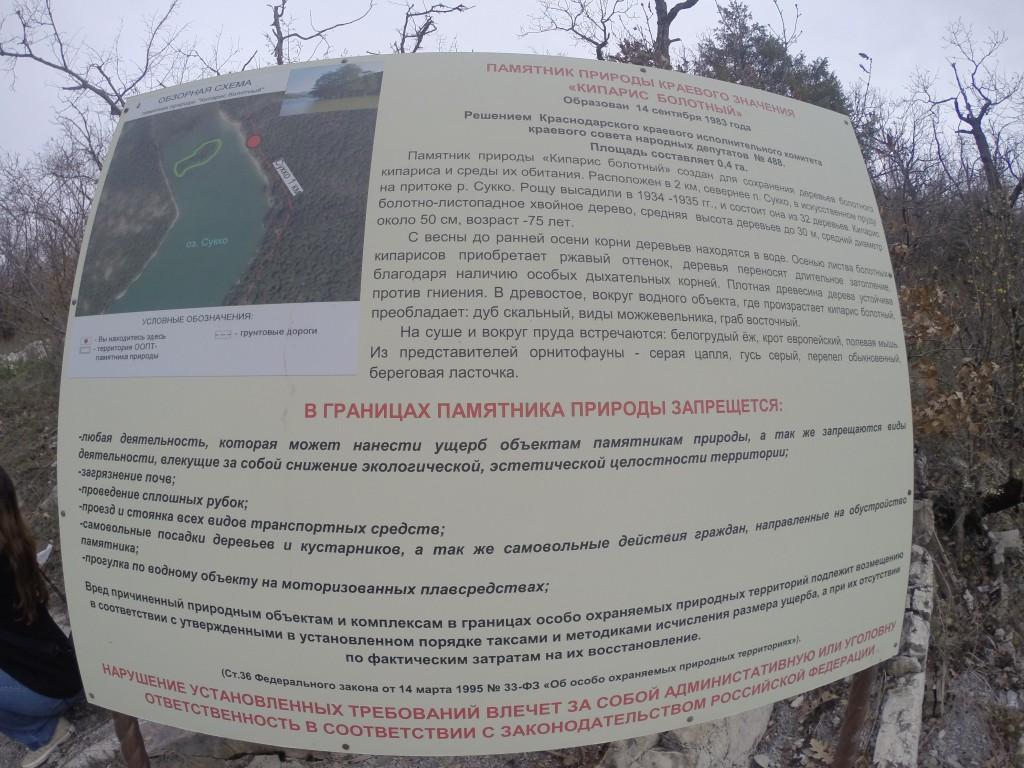 Болотный кипарис, Инфо