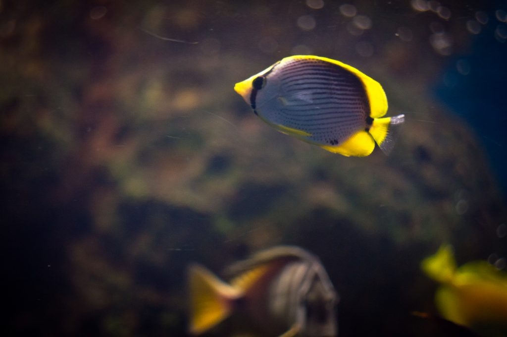Обитатели океанариума в Адлере
