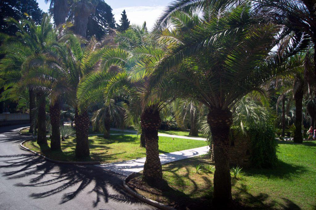 Тропы в Сочинском Дендраррии